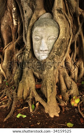Head of Budha sculpture in tree - stock photo