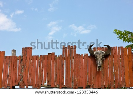 Head of cattle fence and sky. - stock photo