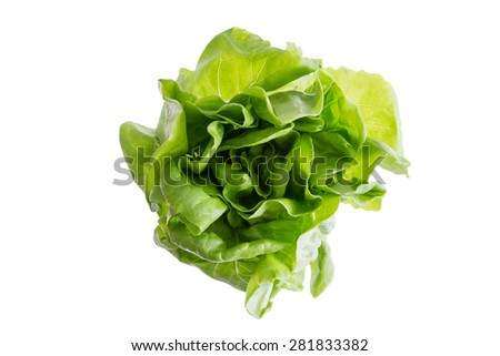 Head of fresh organic butter crunch lettuce grown locally, sustainable no GMO farm produce for a healthy lifestyle, isolated on white - stock photo