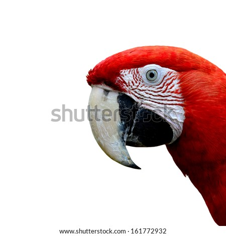 Head of Red-and-Green Macaw Parrot bird, green-winged macaw bird isolated on white background - stock photo