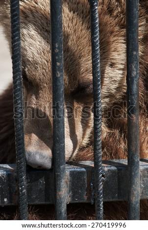 Head of sad bear in cage - stock photo