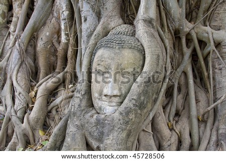Head of Sandstone Buddha at Wat Mahatat, Ayutthaya.Thailand.