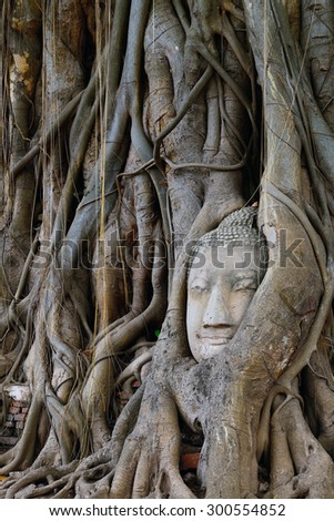 Head of Sandstone Buddha in The Tree Roots at Wat Mahathat, Ayutthaya, Thailand.