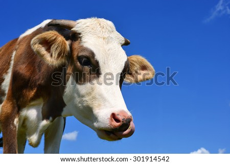 Head of the calf against the sky - stock photo