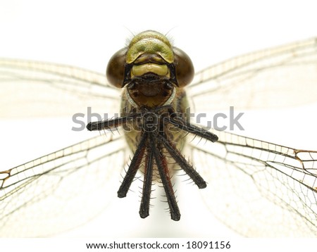 head part of dragonfly isolated on white closeup - stock photo