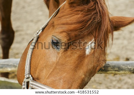 head red horse with a white blaze on his head in the halter