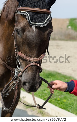 Head-shot of a show jumper horse during training with unidentified rider