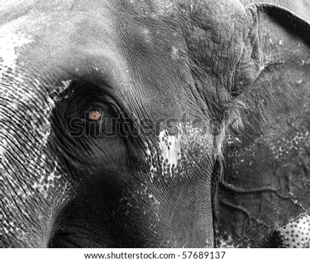 Head shot of elephant - stock photo