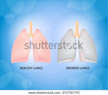 Health lungs and smoker lungs. - stock photo