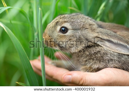 Healthcare and love to nature concept. Beautiful portrait of rabbit bunny in man's hands near green grass.