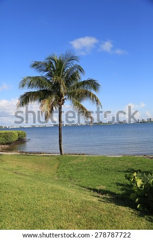 Healthy coconut nut palm tree - stock photo