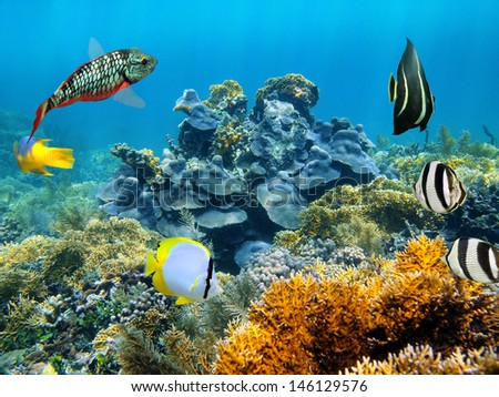 Healthy coral reef underwater with tropical fish in the Caribbean sea - stock photo