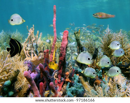 Healthy coral reef with colorful sponges and tropical fish - stock photo