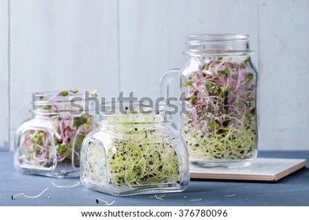 Healthy diet. Fresh Garlic and Radish Sprouts in glass mason jars, standing over blue wooden table.  - stock photo