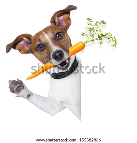 healthy dog with a carrot beside a blank banner