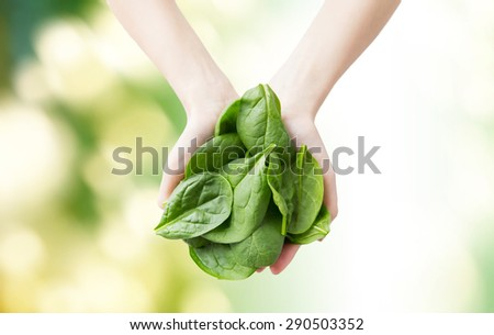 healthy eating, dieting, vegetarian food and people concept - close up of woman hands holding spinach over green natural background - stock photo