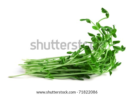 Healthy food.Snow Pea Sprouts isolated on white - stock photo
