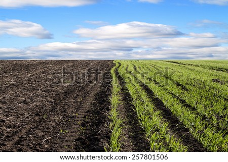 Healthy grass and soil background  - stock photo