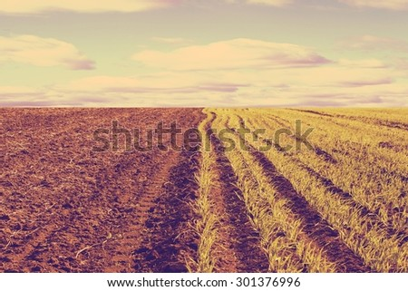 Healthy grass and soil background retro - stock photo