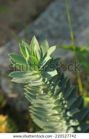 Healthy green succulents - stock photo