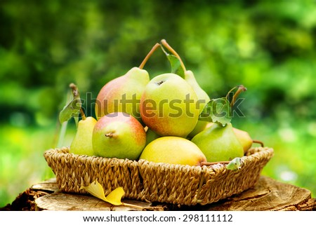 Healthy Organic Pears in the Basket. - stock photo