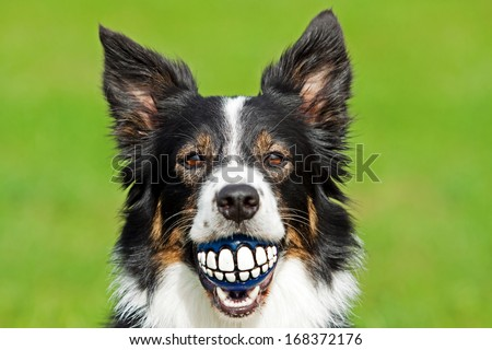 Healthy teeth - stock photo