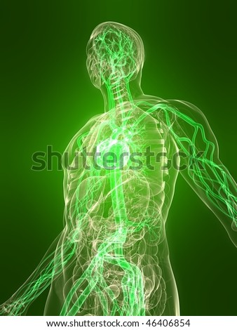 healthy vascular system - stock photo