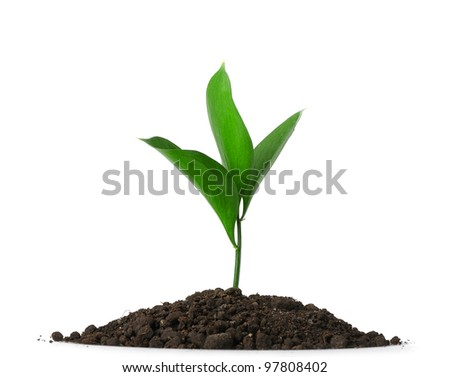 Heap dirt with a green plant. Isolated on white background - stock photo