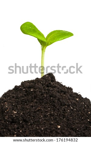 Heap dirt with a green plant sprout isolated on white background