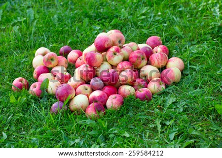 heap of apples outdoor - stock photo