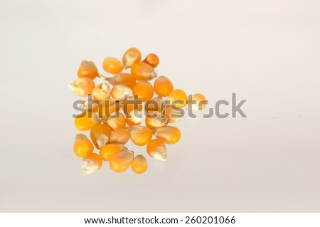 Heap of Dried corn used for making popcorn  - stock photo