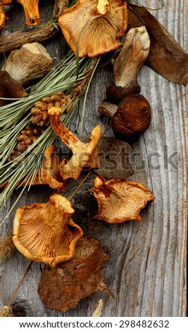 Heap of Dried Forest Chanterelles, Porcini and Boletus Mushrooms with Dry Grass, Leafs and Fir Stems closeup in Rustic Wooden background - stock photo