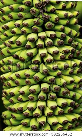 Heap of green banana - stock photo