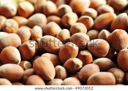 heap of hazelnuts as background