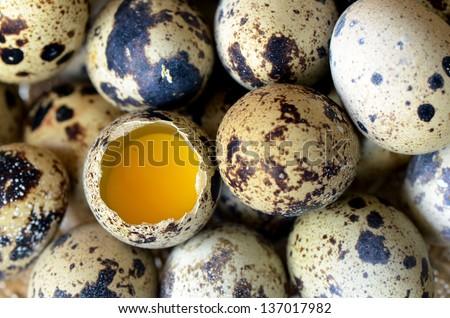 Heap of quail eggs. - stock photo