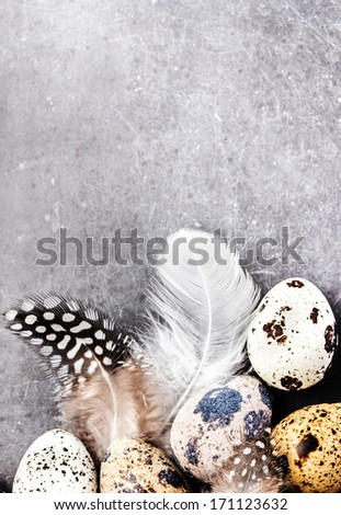 Heap of Quail eggs with feathers on vintage grey scratched textured  background with copy space for text. Easter decorations on gray and white board, closeup. - stock photo