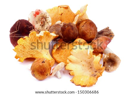 Heap of Raw Forest Edible Mushrooms with Golden Chanterelles, Porcini Mushrooms, Boletus and Russules with Natural Dirties isolated on white background  - stock photo