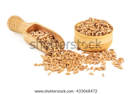 heap of ripe wheat on white background - stock photo