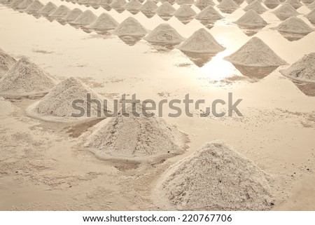 Heap of sea salt in a field prepared for harvest - stock photo