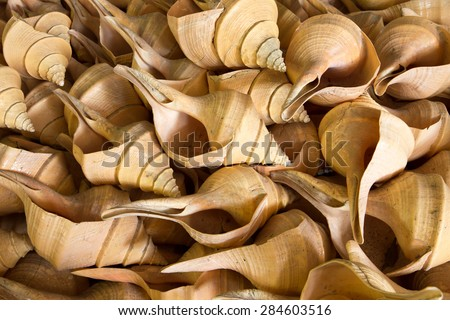 heap of shell use for background - stock photo