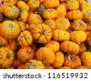 heap of tiny pumpkins - stock photo