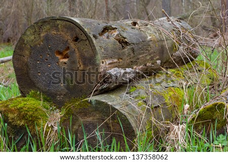 heap of trunks in a forest