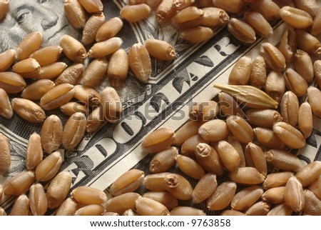 Heap of wheat and money in close up - stock photo