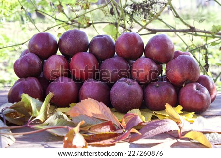 Heap with red ripe apples on wooden table in the garden - stock photo