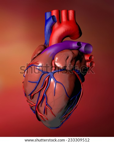 Heart anatomy on red background - stock photo