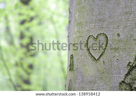 heart carved in the tree - stock photo