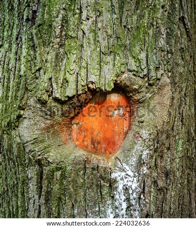 Heart carved in tree bark and is painted in red color - stock photo