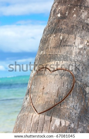 Heart cutted on palm - stock photo