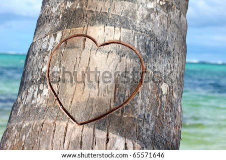 Heart cutted on palm, closed-up