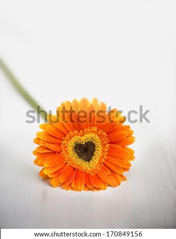 Heart from orange daisy-gerbera on white table - stock photo